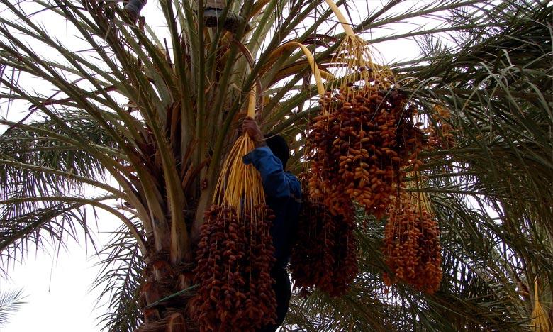 «Saham Agri» a été distinguée dans la catégorie «Innovations pionnières au service du secteur agricole». Ph. DR