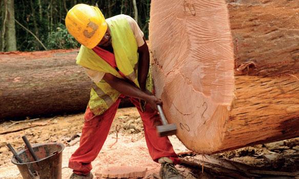 Permis d'exploiter suspendu pour un forestier chinois