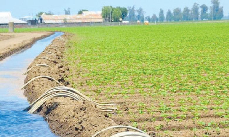 Le secteur agricole représente une part non négligeable de la consommation énergétique nationale, concentrée principalement au niveau des équipements d'irrigation, des tracteurs et moteurs, des séchoirs et des bâtiments d'élevage.