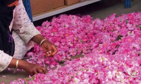 Comment la valorisation de la rose à parfum peut contribuer au développement local