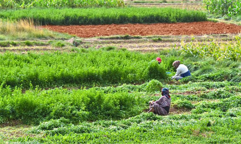 Les femmes, épine dorsale de l'activité agricole