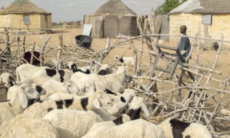 Neuf millions d'euros au profit  des populations des zones désertiques