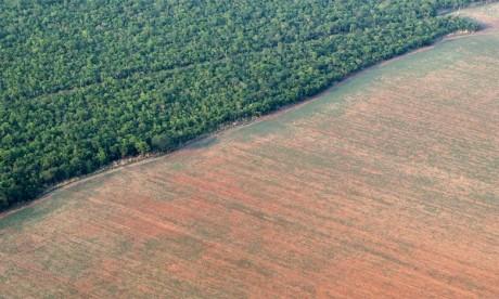 Entre août 2017 et juillet 2018, 7.900 km² ont été déboisés en Amazonie, l'équivalent d'un million de terrains  de foot, selon Greenpeace. Ph. DR
