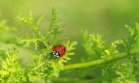 Jour de la Terre : le monde se penche sur la protection des espèces
