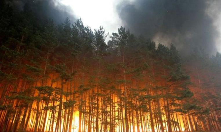 3.568 hectares  de forêt ravagés  par le feu en une journée