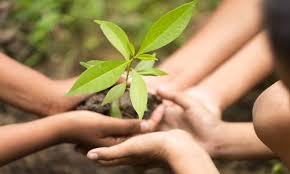Environnement : La CEA et la FAO accompagnent des experts marocains