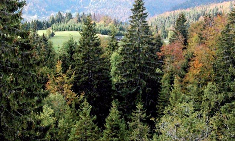 L'accord accorde un intérêt particulier à la Maison de la Cédraie, située au cœur du parc national d'Ifrane. Ph : DR