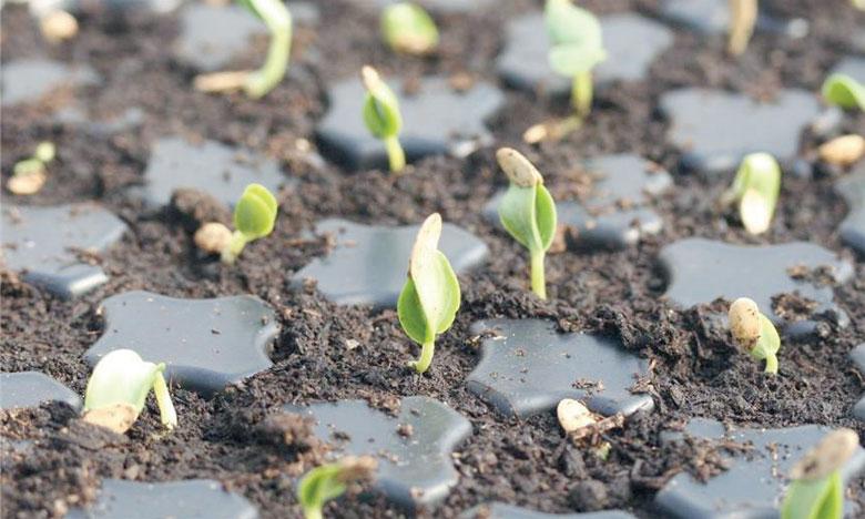 L'érosion du sol peut réduire le rendement des cultures jusqu'à 50%. Ph. DR