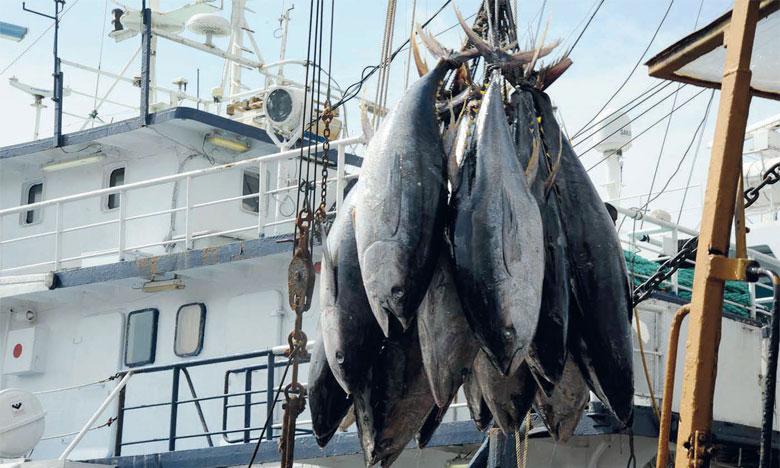 Un tiers des stocks de poissons  surexploités dans le monde