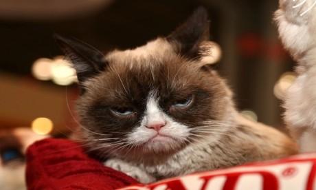 Mort de Grumpy Cat, une star de la toile !
