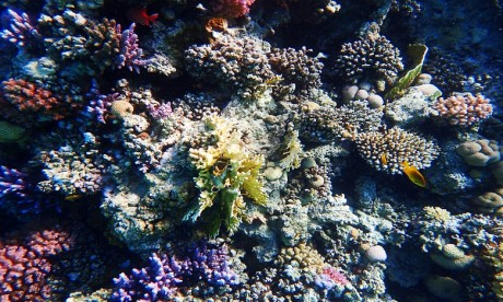 La pêche au corail est strictement limitée en Tunisie et suspendue en Algérie depuis plus de vingt ans. Ph. Shutterstock