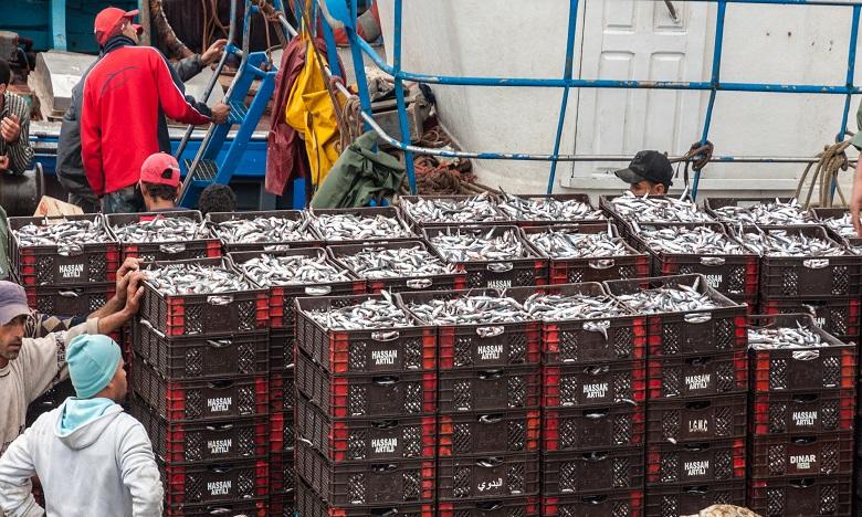 Pêche : un nouveau système de pesage des captures bientôt en place