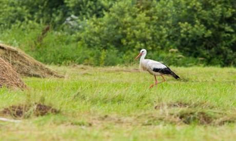L'AMCDD pour la protection des zones humides