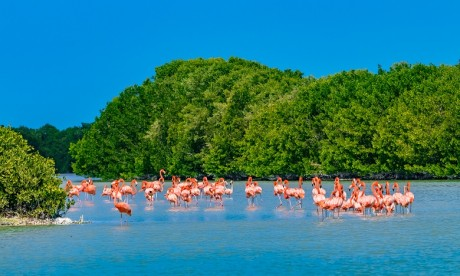 Ces réserves visent à concilier la conservation de la biodiversité et les activités humaines par l'utilisation durable des ressources naturelles. Ph. Shutterstock