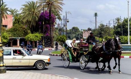 Concours: Les chevaux des calèches marrakchies primés