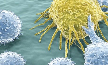 L'immunothérapie en cancérologie, thème d'une rencontre ce samedi à l'UM6SS