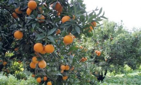 La société agricole Mimona dans le giron d'Holmarcom