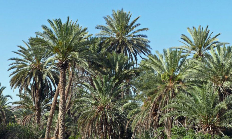 La province d'Assa-Zag bénéficie  de 129,96 millions de dirhams