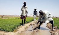 179 millions de dollars au profit de projets coordonnés par la FAO