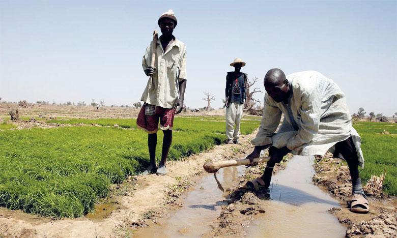 Le programme a pour objectif de soutenir les efforts destinés à éviter, réduire et inverser la tendance à la déforestation, la dégradation des terres et la désertification essentiellement en Afrique. Ph. Reuters
