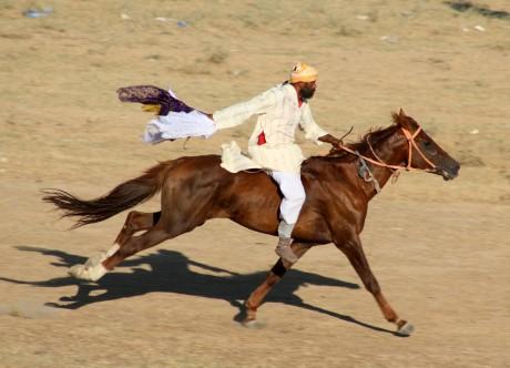 L'héritage ancestral des arts équestres honoré