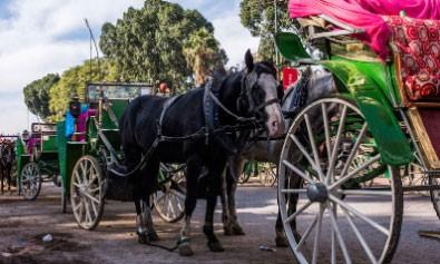 Remise des Prix du concours dédié aux chevaux des calèches
