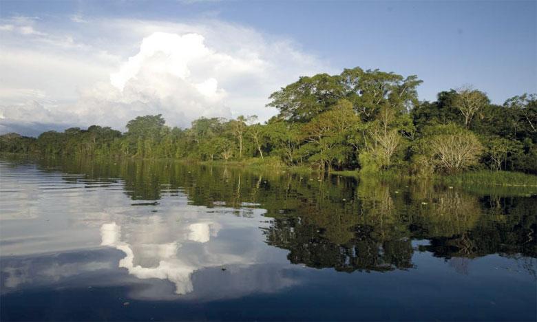 La déforestation en Amazonie a augmenté de 54% en janvier 2019 par rapport à janvier 2018. Ph. DR