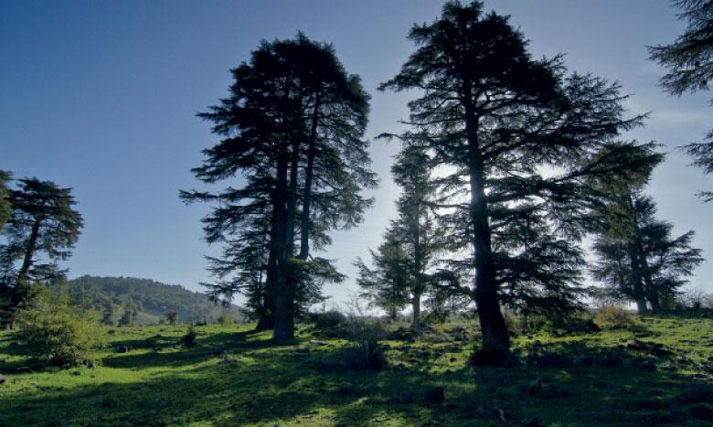 Le Plan décennal 2015-2024 prévoit le reboisement de 600.000 ha, dont 30.000 ha de cèdres au niveau de la région d'Ifrane.