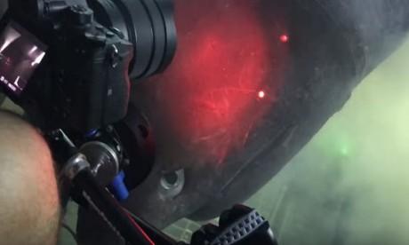 Un requin préhistorique filmé au large des Bahamas