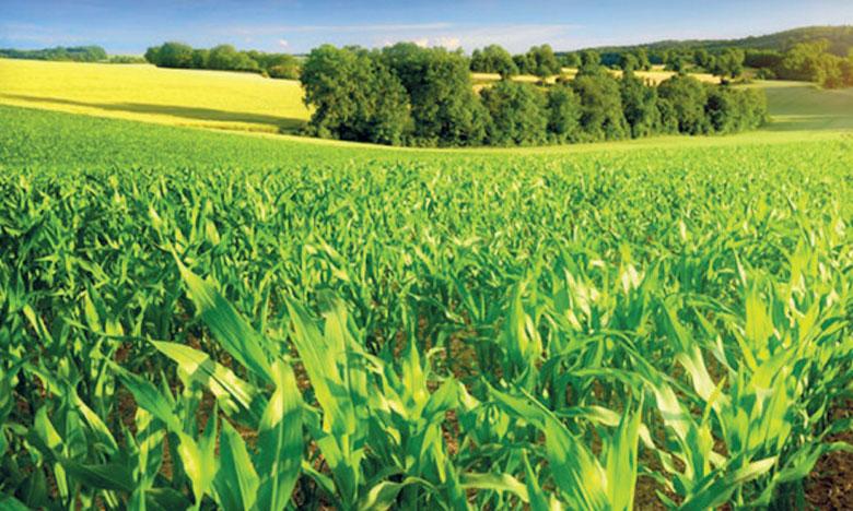 Les leviers à activer pour une nouvelle feuille de route agricole