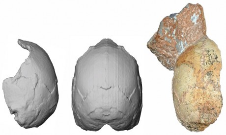 Apidima 1 est plus vieux que tous les autres spécimens d'Homo sapiens retrouvés hors d'Afrique. Ph. AFP