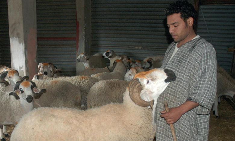 Aïd Al Adha : Un mouton à tout prix