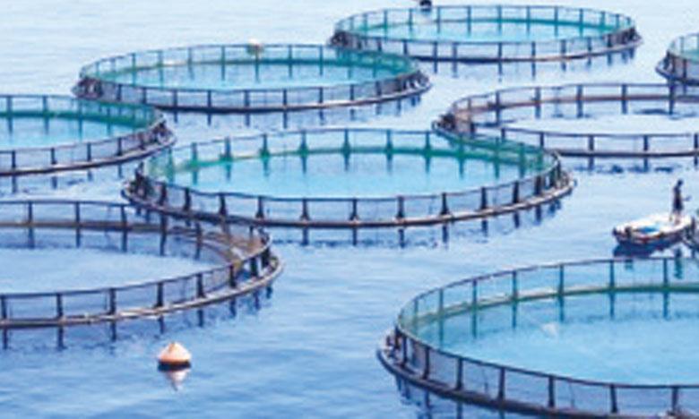 Le groupement Stecof-Aqualog retenu pour l'installation des fermes
