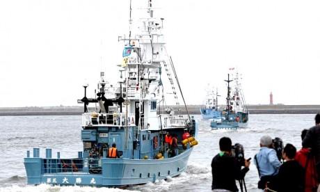 Les navires de chasse à la baleine ont quitté le Japon, alors que le pays entamait sa première chasse commerciale depuis des décennies, après s'être retiré de la Commission baleinière internationale. Ph : AFP