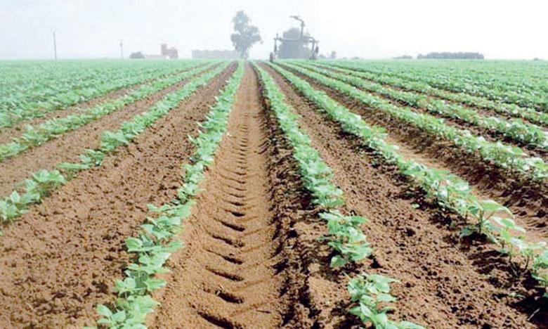 Selon l'Agriculture, la déperdition des terres agricoles est devenue préoccupante et risque de s'aggraver en l'absence de mécanismes de veille et d'outils d'aide à la décision.