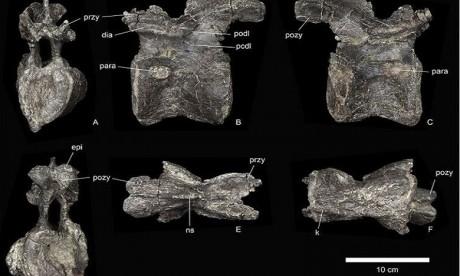 Le plus vieux des stégosaures découvert au Maroc