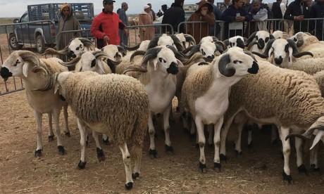 Une offre abondante de bétail et une affluence moyenne