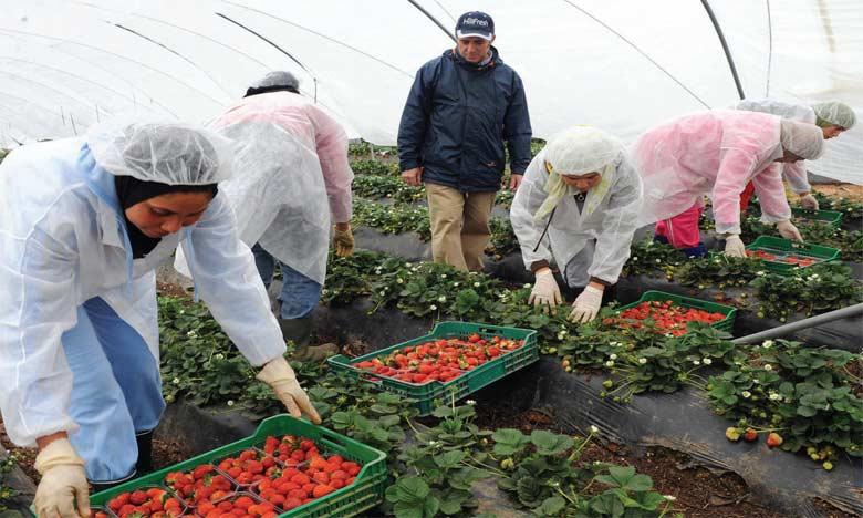Le Maroc et l'Espagne dressent un bilan positif du recrutement de 14.583 personnes pour la campagne 2018-2019 des fraises et des fruits rouges dans la province de Huelva