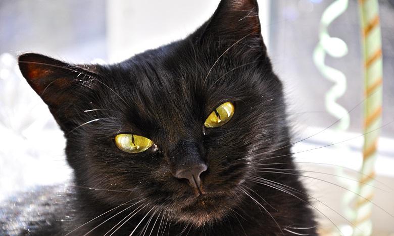 Le monde fête demain le chat noir, ce mal aimé !