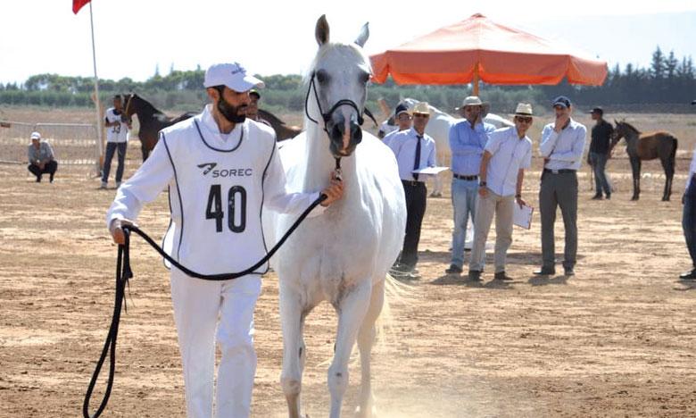 La SOREC lance l'édition 2019 des concours interrégionaux d'élevage des chevaux arabes-barbes