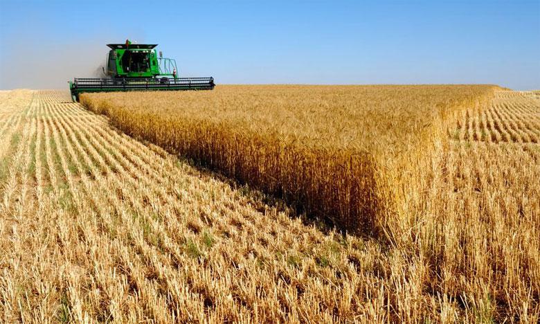 Les prévisions de production mondiale de céréales ont augmenté de 22 millions de tonnes, passant à 2.708 millions, soit  une augmentation de 2,1% comparativement à 2018. Ph. DR