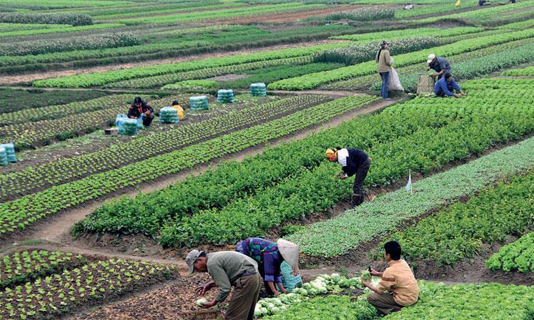 Le système alimentaire mondial contribue jusqu'à 30% aux émissions mondiales de gaz à effet de serre. Ph. DR.