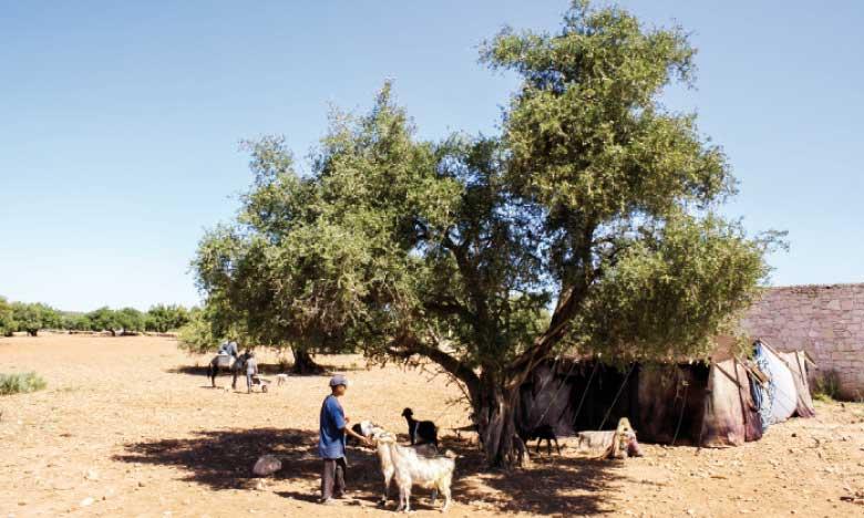 Biosphère de l'arganeraie : Un observatoire dédié dans le pipe