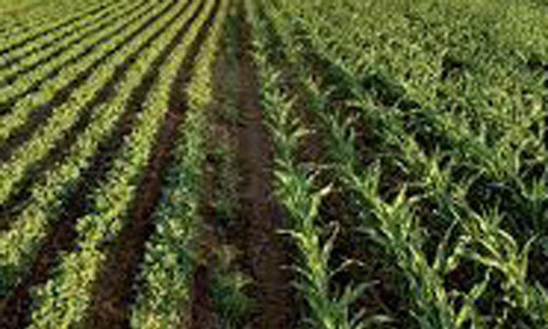 Crédit Agricole du Maroc  à Libreville en novembre