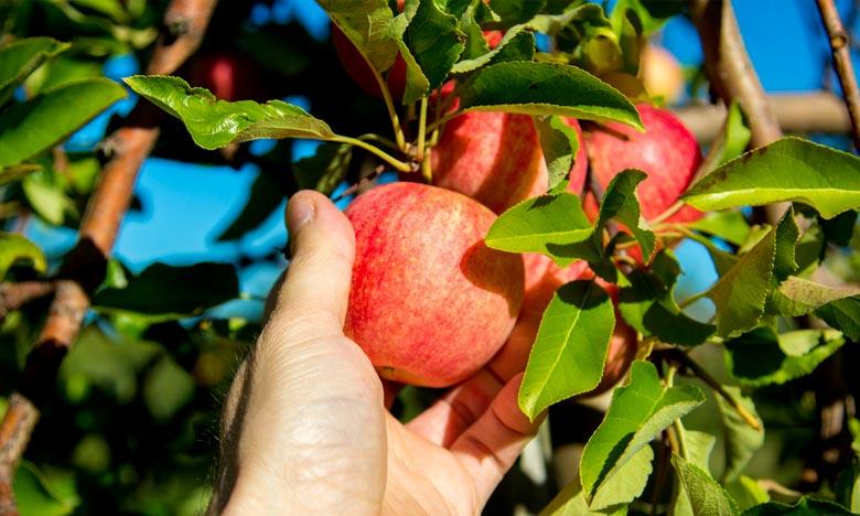 Midelt : Coup d'envoi du Salon national de la pomme