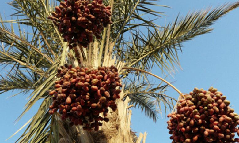 La FAO fait la promotion de la  consommation de la datte