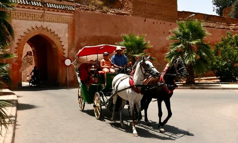 Marrakech: 148 conducteurs des calèches dotés d'uniformes