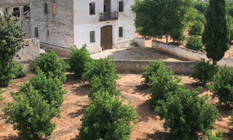L'Horta de Valence portée sur la liste des systèmes ingénieux de la FAO