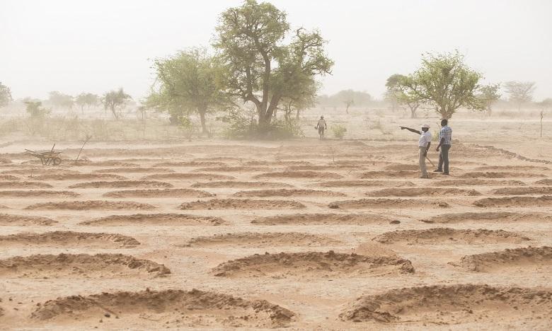 Selon la FAO, environ 1,1 milliard d'hectares des zones arides (18%) sont constitués de forêts. Ph. DR