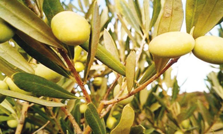 Un projet de 82,6 millions d'euros  en faveur des agriculteurs vulnérables